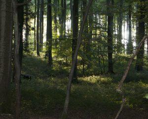 forest-300x242.jpg